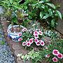 女性家族暮らし4LDK、撫子Entranceや庭や撫子やアイビーなどに関するRenさんの実例写真