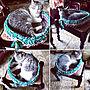 女性一人暮らし1LDK、バッグ作りBedroomや猫や手編みやズパゲッティなどに関するemmyyさんの実例写真