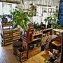 男性3LDK、ビザールプランツMy Deskや賃貸DIYや植物のある暮らしや現状回復などに関するugさんの実例写真