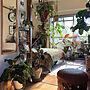 男性一人暮らし1DK、プランツOverviewや観葉植物やグリーンやアンティークなどに関するSHINPEIさんの実例写真