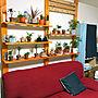 男性31歳の一人暮らし1K、ソファーカバーリビングや観葉植物や植物やソファなどに関するnumaさんの実例写真