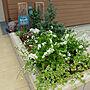 女性39歳の家族暮らし2LDK、雪柳Entranceや北玄関や花壇やガーデニング初心者などに関するShooowkoさんの実例写真