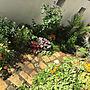 女性33歳の家族暮らし、サビサビラダーEntranceや植物や庭や花のある暮らしなどに関するcocco0505さんの実例写真