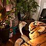 女性家族暮らし、猫パンチLoungeや猫パンチやhawaiiチャンのカンナやエスニックなどに関するaiaiさんの実例写真