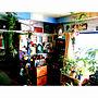 女性37歳の家族暮らし3LDK、アトリエ beachhouseOverviewや観葉植物や雑貨や手作り雑貨などに関するkyooonさんの実例写真