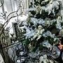 女性で、OtherのEntrance/クリスマスツリー/羽/LEDキャンドル/ジョイフル本田/ダイソー雑貨…などについてのインテリア実例を紹介。