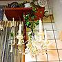 女性、手作りシャンデリアKitchenやセリアや手作りシャンデリアやグリーンのある暮らしなどに関するodekoさんの実例写真