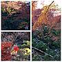 男性家族暮らし、浜松花嫁さんやコスプレイヤーや浜松城公園や美しい物を観たくてなどに関するohama147さんの実例写真