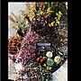 女性家族暮らし、姫麒麟Entranceやルビーネックレスや多肉植物やユーフォルビアなどに関するkayoさんの実例写真
