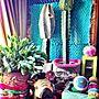 家族暮らし、capi棚や観葉植物や植物やサボテンなどに関するlalaさんの実例写真