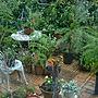 女性家族暮らし、ガーデンテーブル&チェアBathroomや寄せ植えや雨の庭やガーデンテーブル&チェアなどに関するkimiさんの実例写真
