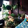 女性家族暮らし、もと畳和室Bedroomやセルフリフォームした寝室やNO GREEN NO LIFEや観葉植物のある暮らしなどに関するnikkoriさんの実例写真