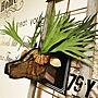 女性家族暮らし、DIY ビカクシダ部屋全体や植物や雑貨やハンドメイドなどに関する79Yさんの実例写真