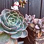 女性家族暮らし、白いトレリスEntranceや七福神や多肉植物や秋麗などに関するredberryさんの実例写真