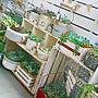女性、ほっこり*バスルームや観葉植物やナチュラルや植物などに関するkanananaさんの実例写真