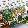 女性、木の雑貨玄関/入り口や観葉植物やナチュラルや植物などに関するkanananaさんの実例写真