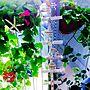 Entrance/ナチュラル/雑貨/100均/DIY/カフェ風/キャンドルスタンドDIY/家庭菜園 ハーブ トマト ゴーヤ/廃材、不用品でハンドメイドに関連する部屋のインテリア実例