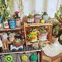 My Shelf/サボテン/雑貨/多肉植物/セリア/キャンドゥ/リメ缶/ごちゃごちゃ/すのこ棚/リメイクシート/はんどめいど/りめ鉢/これさえあれば、わたしの部屋に関連する部屋のインテリア実例