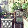 My Shelf/観葉植物/簡単リメイク/簡単DIY/手編みドイリー/空き箱リメイク/端材リメイク/NO GREEN NO LIFE/お花のある暮らし/セリアリメイクシート/miwaちゃんのペパナプリース♡/hirokoちゃんのドライ♡/ダイソーマルチマットに関連する部屋のインテリア実例