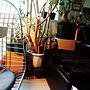 Lounge/アデニウム/骨董屋さん/NO GREEN NO LIFE/RC北海道支部/植物のある生活/植物のある暮らし/こどもと暮らす。/子供のいる暮らし/理系インテリア/男の子と暮らす。/植物に囲まれ隊に関連する部屋のインテリア実例