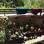 Overview/観葉植物/ベランダ/多肉植物/洗濯/NO GREEN NO LIFEに関連する部屋のインテリア実例