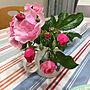 My Desk/ナチュラル/花壇/アンジェラ/いつもいいねありがとうございます♡/ブルーグレー/好きな色♡/建て売り一戸建て/コメントお気遣いなく♡/お花大好き❁❀✿✾/RC初老クラブ/フォローありがとうございまーす。/もうすぐ定年に関連する部屋のインテリア実例