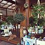 Entrance/観葉植物/多肉植物/リメ缶/犬と暮らす家/ケーブルドラム/犬と暮らす/雑貨大好き♡/プラントハンガー作りました/いつもいいね!ありがとうございます♪/みどりのある暮らし/木彫の熊/ハンモックのある暮らし/多肉大好き/トィプードル/木彫のトィプードルに関連する部屋のインテリア実例