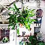 My Shelf/ダイソー/植物/ガーデニング/100均/DIY/セリア/indoor green/100均リメイク/壁面ディスプレイ/壁面/NOGreenNOLife/植物のある暮らし/Indoor Green Style/植物と暮らすに関連する部屋のインテリア実例