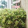 Bedroom/ガーデニング/手作りの庭/花のある暮らし/フォローありがとうございます☆/ブロウメアナ/いつもいいね!押し逃げごめんなさい/いいね♪いつもありがとうございます❤️/緑のある暮らし/観葉植物のある暮らし/ドライフラワーのある暮らし/ペキュリアリス/多肉植物のある暮らし/コメントとっても喜んでいます♡/RCのご縁 ありがとうございます。/オキナワスズメウリ部/sanbiちゃんからのブロウメアナ/2018.10.23/訂正:ブロウメアロナ=ブロウメアナに関連する部屋のインテリア実例