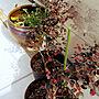 Entrance/ビオトープ/紅花トキワマンサクに関連する部屋のインテリア実例