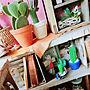 My Shelf/キャンドル/サボテン/handmade/クロスオブジェ/カクタスボーン/boho beach styleに関連する部屋のインテリア実例