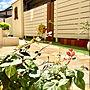 On Walls/レンガ/フェンス/ウォール/寄植え/初雪カズラ/テラコッタ鉢/乱形石に関連する部屋のインテリア実例