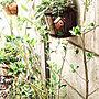 Entrance/観葉植物/ナチュラル/ガーデニングに関連する部屋のインテリア実例
