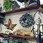 My Shelf/ハンドメイド/はんどめいど/男前もかわいいも好き♡/植物のある暮らし/塩ビパイプ棚/デニムリース/ウッドスター☆/ボタニカルスタイル/Botanical Style/手芸クラブ♡/コメントスルーで大丈夫です♡/IG→yun00217に関連する部屋のインテリア実例