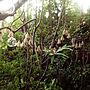 My Shelf/観葉植物/植物/庭/アンティーク/ガーデニング/ガーデン/手作り/ガーランド/ヴィンテージ/ねこのいる風景/NO GREEN NO LIFE/ペットと暮らす家/グリーンのある暮らし/グリーンのある生活/ねこと暮らす。/緑のある暮らし/絨毯オタク/緑のある生活/ふるいものが好き❤/いぬもいる日常/NO CAT,NO LIFE❤️/ボヘミアンミックス/緑のある空間に関連する部屋のインテリア実例