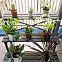 観葉植物/ガーデニング/多肉植物に関連する部屋のインテリア実例