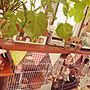 観葉植物/100均/カフェ風/セリア/ガーランド/うさぎ/リース/うさぎリース/うさカフェに関連する部屋のインテリア実例