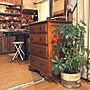Kitchen/ダイソー/ニトリ/セリア/賃貸/カポック/スキレット/男前もナチュラルも好き/植物が好き/暮らしを楽しむ/キッチン汚れ防止シート/ヘリンボーン柄/オイルステイン オーク/賃貸でも楽しく/頭痛持ちに関連する部屋のインテリア実例