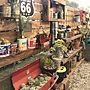 My Shelf/ダイソー/サボテン/工具箱/多肉植物/セリア/すのこ/NO GREEN NO LIFE/いいね、フォロー本当に感謝デス☺︎/マキシマリスト/ダイソーのミルクペイント/アメリカテイストに関連する部屋のインテリア実例