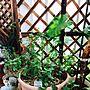 Overview/植物/ガーデニング/ハーブ大好き/日替わり投稿企画!木曜日に関連する部屋のインテリア実例