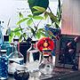 Overview/観葉植物/モンステラ/パキラ/マンション暮らし/秋田/ストームグラス同好会/装飾電球/2018.3.21☁️/nana.maroさんフォトフレームに関連する部屋のインテリア実例