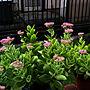 Entrance/今日も素敵な1日を❤️/RC の出会いに感謝!/いいね、フォロー本当に感謝です♡/仲良くしてもらえたらうれしいです♡/ミセバヤ♡/お花が咲き始めました♪に関連する部屋のインテリア実例