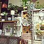 My Desk/観葉植物/エアプランツ/簡単リメイク/簡単DIY/すのこ棚/手編みドイリー/空き箱リメイク/端材リメイク/NO GREEN NO LIFEに関連する部屋のインテリア実例