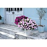 【無料モニター】玄関やお庭に♪秋まで楽しめるお花を飾って、花のある暮らしを送りたい方、大募集!