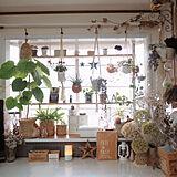 お部屋が華やぐ♪ディアウォール・ラブリコの棚実例10選