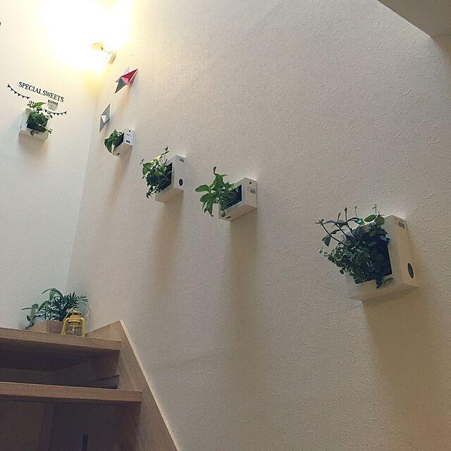 On Walls,壁にかけられる観葉植物,無印良品,ナチュラル,白 akkoの部屋