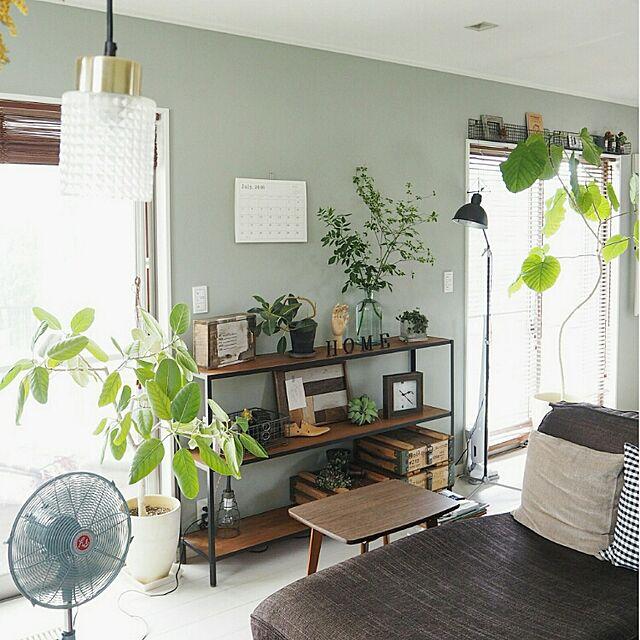 My Shelf,連投失礼します(>_<),壁紙屋本舗さん,フェイクグリーン,いなざうるす屋さん,インダストリアル,アンティーク,グリーンのある暮らし,イケア,無印良品,グリーン,ウンベラータ,クッション,アイアン,アンモボックス asasaの部屋