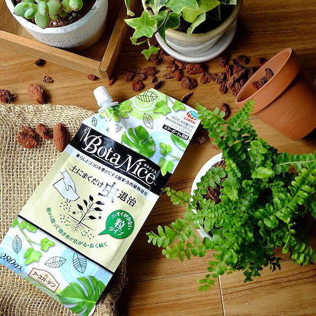 【無料モニター】観葉植物初心者も必見♪ 室内で使える「土にまくだけ虫退治」のモニター大募集!