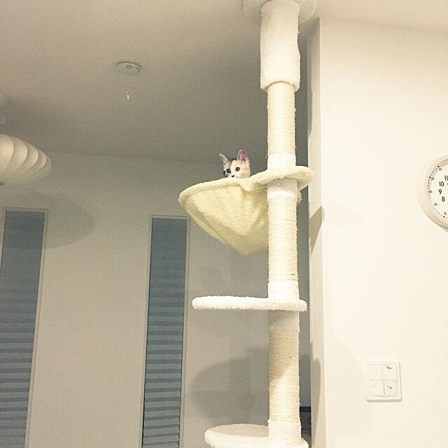猫ハンモック,キャットタワー突っ張り,キャットタワー,猫スペース,猫のための家づくり,ルームクリップマグ,ルームクリップマグ掲載,RoomClip mag mikkumikuの部屋