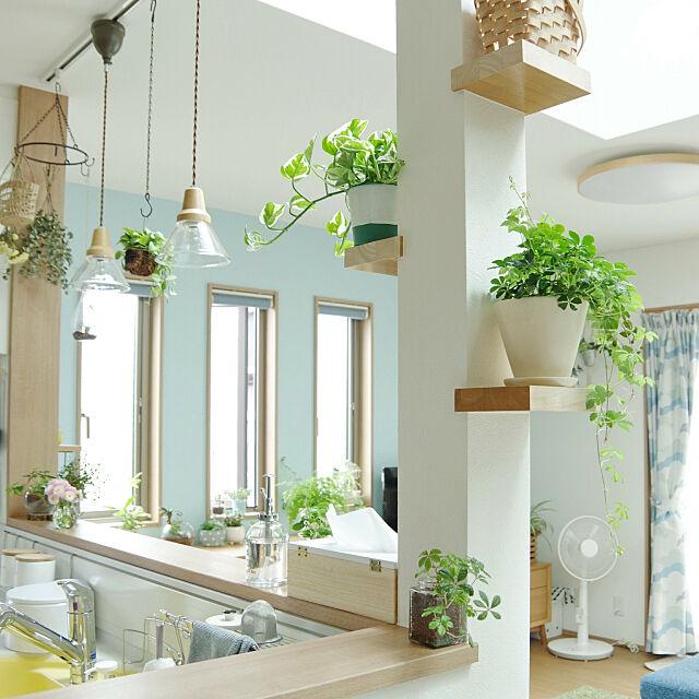 My Shelf,平屋,柱に飾り棚,グリーンのある暮らし,ポトス エンジョイ,シュガーバイン,ペンダントライト,アクセントクロス,水色の壁,三連窓,対面キッチン,北欧ナチュラル Shooowkoの部屋